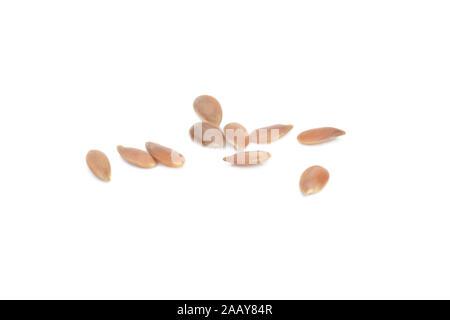 Saat-Lein, Flachs (Linum usitatissimum), einzelne Samen | common flax (Linum usitatissimum), single seeds | BLWS035028.jpg [ (c) blickwinkel/fotototo - Stock Photo