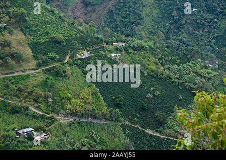 Coffee landscape in Colombia. - Stock Photo