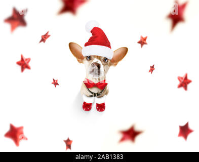 christmas santa claus chihuahua dog as a holiday season surprise  with red hat , isolated on white background with stars falling - Stock Photo