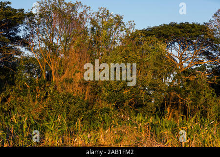 trees of las isletas de Granada Nicaragua lake - Stock Photo