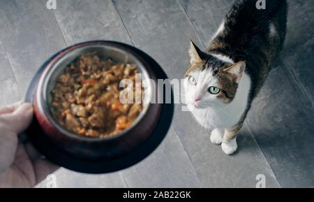 Cute tabby cat looking up and waiting for Food. - Stock Photo