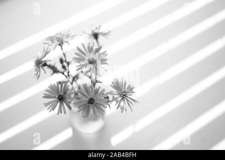 small bouquet of chrysanthemums on the windowsill, bw. - Stock Photo