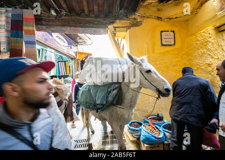 Fez, Morocco. November 9, 2019. the animals that transport the goods through the narrow streets of the medina - Stock Photo