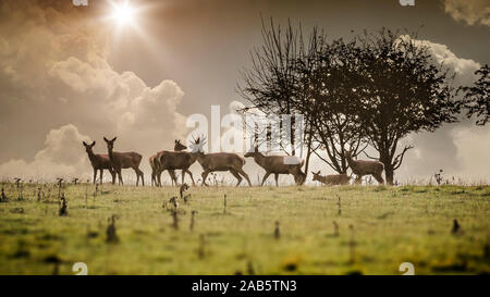 Sieben Hirsche im Morgengrauen - Stock Photo