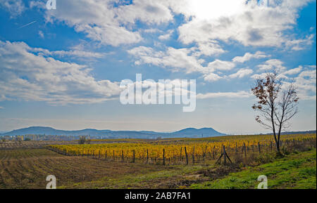 Beautiful vineyard on a hill. Mountains in the background. Cloudy blue sky. Autumn landscape. Yellow and orange vineyard.