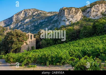 vineyards in the wine region Languedoc-Roussillon, Roussillon, France. - Stock Photo