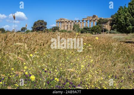 Doric order Temple E also called Temple of Hera in Selinunte ancient Greek city on the south western coast of Sicily in Italy. - Stock Photo