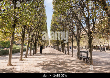 Rows of espaliered trees in the gardens of the Palais Royale, Paris, France - Stock Photo
