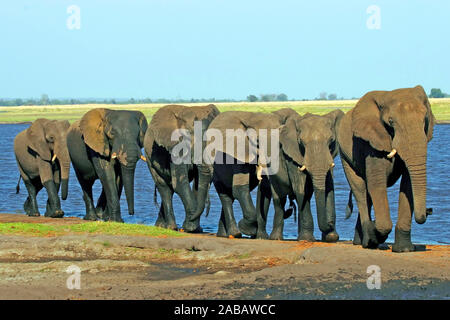 Elefantenherde am Wasserloch - Stock Photo