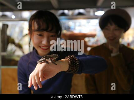 A person holds a tree frog in a reptile-themed pet cafe in Chengdu city, south-west China's Sichuan province, 30 October 2019. - Stock Photo