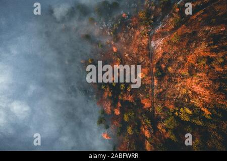 Amazing aerial view of foggy and colorful forest on sunrise. Autumn landscape. Drone shot - Stock Photo