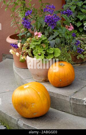 Haus, Garten, Natur, Blumenkuebel, Kuerbiss, Dekoration, Steintreppe, Halloween, - Stock Photo