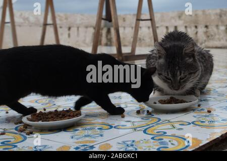 Two cats eating from same bowl - Stock Photo