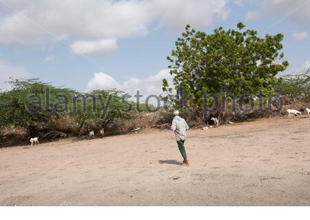 Kenya - Dadaab - 24th July 2011. Mohammed Ahmed Shuria, 60 years old, walking in his field inside Hagadera refugee camp where he arrived in 1991, when the war started in Somalia. Due to the drought his field has been unproductive for the past 2 years. Bef - Stock Photo