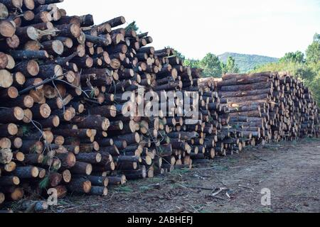 A pile of cut logs in a forest - Stock Photo