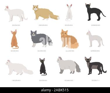 Type rex cats. Domestic cat breeds and hybrids collection isolated on white. Flat style set. Vector illustration - Stock Photo