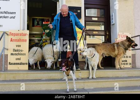 Schkeuditz, Germany. 21st Oct, 2019. Werner Dreßler runs with lamb Nanni, the sheep Flöckchen and the dogs Holly, Emmy and Rocky down the steps to the walkway in front of his metal goods retail shop. The 79-year-old trained master toolmaker takes the five animals for a walk in the city every day and is then an eye-catcher for locals and visitors alike. Credit: Waltraud Grubitzsch/dpa-Zentralbild/ZB/dpa/Alamy Live News - Stock Photo