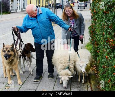 Schkeuditz, Germany. 21st Oct, 2019. Werner Dreßler walking with his animals, three dogs and two sheep in the city centre. A woman uses the opportunity to stroke a sheep briefly. The 79-year-old master toolmaker takes the animals for a walk in the city every day and is an eye-catcher for locals and visitors alike. Credit: Waltraud Grubitzsch/dpa-Zentralbild/ZB/dpa/Alamy Live News - Stock Photo