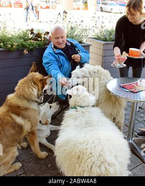 Schkeuditz, Germany. 21st Oct, 2019. Werner Dreßler sits with his animals, three dogs and two sheep in Jacqueline Rudolph's ice cream parlour. While he wants to enjoy ice cream and coffee, sheep and dogs are already waiting for the obligatory delicious biscuits. The 79-year-old master toolmaker takes the animals for a walk in the city every day and is an eye-catcher for locals and visitors alike. Credit: Waltraud Grubitzsch/dpa-Zentralbild/ZB/dpa/Alamy Live News - Stock Photo