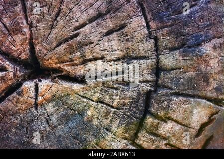 Old tree stump texture background. Close-up of cross section of a tree stump with patterns of arcs, circles and cracks. Rotten wood of old stump.