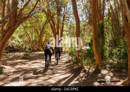 Rear view of young couple riding bicycle in through Chilean myrtle trees forest in Arrayanes National Park, Villa La Angostura, Patagonia, Argentina - Stock Photo