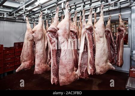 Pig carcasses cut in half stored in refrigerator room, toned image - Stock Photo