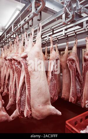 Pig carcasses cut in half stored in refrigerator room of food processing plant, toned image - Stock Photo