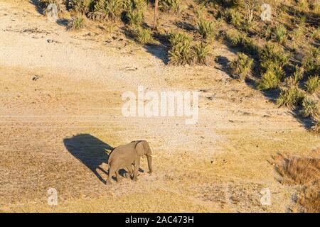 Aerial view of African Elephant, Loxodonta africana, and shadow, Macatoo, Okavango Delta, Botswana