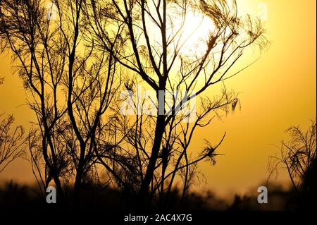 sun sets in smoke at emmaville in northern new south wales in australia, due to nearby bushfires - Stock Photo