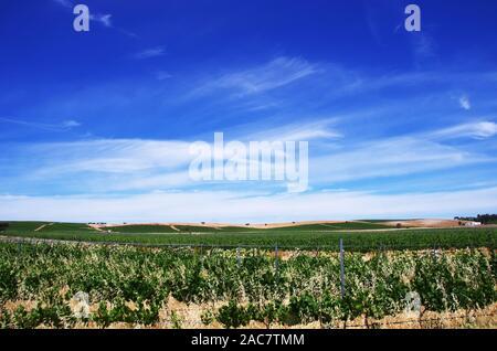 Landscape of portuguese vineyard, alentejo region - Stock Photo