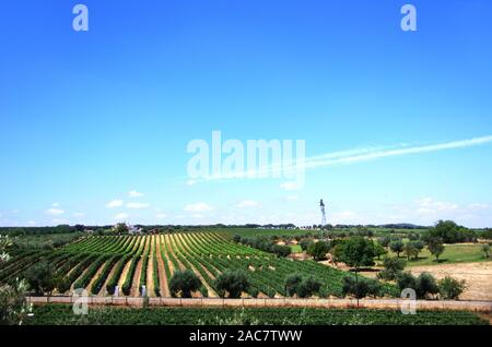 vineyard in farm at south of Portugal - Stock Photo