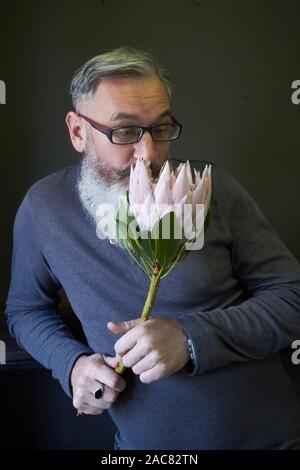 Gray-haired man with glasses and a beard holds a pink protea in his hands, selective focus - Stock Photo