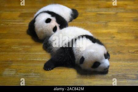 Cute panda bear newborn babies resting in crib - Stock Photo