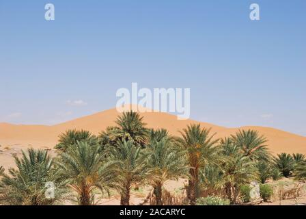 Dune vegetation and sand dunes of Erg Chebbi, Morocco, Africa - Stock Photo
