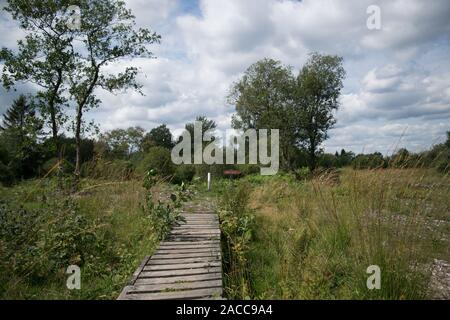High Fens, Hautes Fagnes, at the eifel national park, germany - Stock Photo
