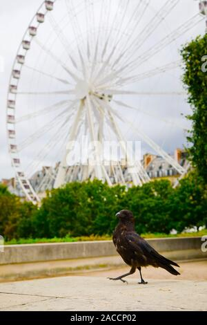 Crow sitting in front of big russian wheel carousel - Stock Photo