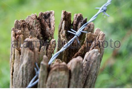 Nahaufnahme Stacheldraht Zaun an einer Weide - Stock Photo