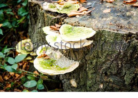 Pilze im Wald, Boden und Baum - Stock Photo