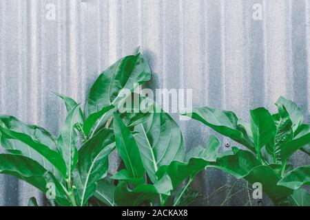 Green leaves on a gray background. Copy space, place for text. Nature banner design. - Stock Photo