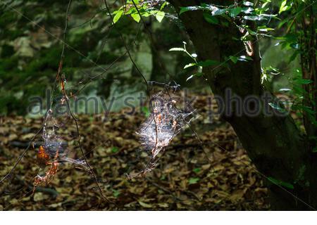 Spinnennetz im Wald Gegenlicht - Stock Photo