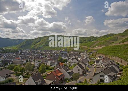 Dernau an der Ahr wine village, vineyards in the Ahr valley, Pinot Noir and Portuguese grape, red wine region, Eifel, Rhineland- - Stock Photo