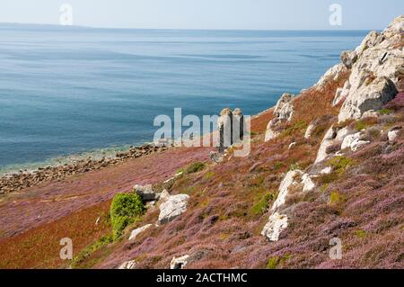 Flora and Iroise sea, Cap de la Chevre, Armorique Regional National Park, Crozon peninsula, Finistere (29), Brittany, France - Stock Photo