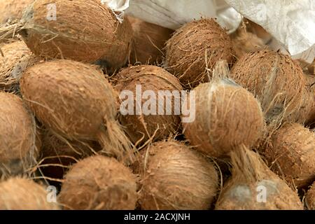 Pile of coconuts in the food market - Stock Photo