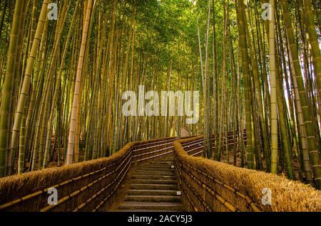 Arashiyama, Bamboo Forest in Kyoto, Japan