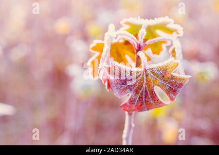 Frozen autumn leaves - shallow depth of field - abstract vibrant background - Stock Photo