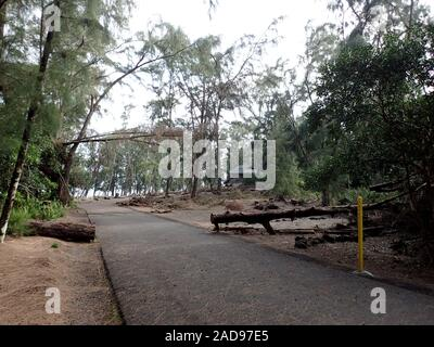 Road into MacKenzie State Recreation Area with Debris in the way on a voggy Big Island day. - Stock Photo