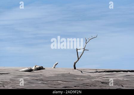 Dead tree on a sandbank in the estuary of the Rio Platanal Panama - Stock Photo