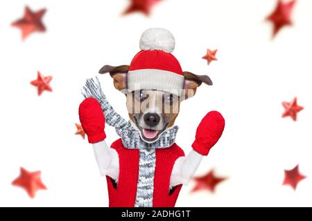 christmas santa claus jack russel dog as a holiday season  with red hat , isolated on white background with stars falling - Stock Photo