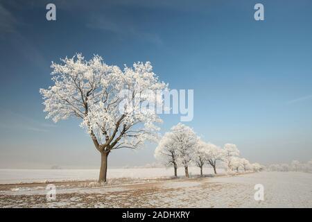 Winter tree on a sunny morning. - Stock Photo
