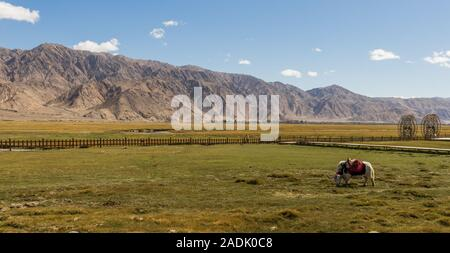 Tashkurgan's economy still relies a lot on animal products, like milk, fur, meat. Here in the picture a domestic yak - Stock Photo